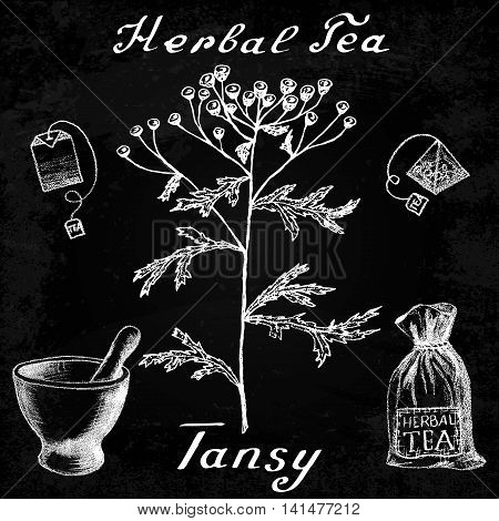 Tansy hand drawn sketch botanical illustration. Vector drawing. Herbal tea elements - tea bag bag mortar and pestle. Medical herbs. Lettering in English languages. Effect chalk board