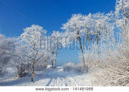 the trees are covered with snow and hoar frost