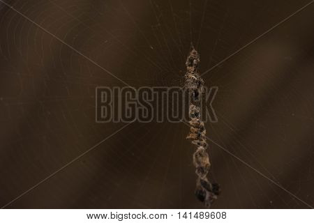 Small Spider on it 's net .