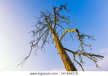High  Dead Tree Under Blue Sky
