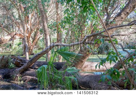 Trees, foliage and tropical plants at the Secret Garden in the Careniup Wetlands in Gwelup, Western Australia.