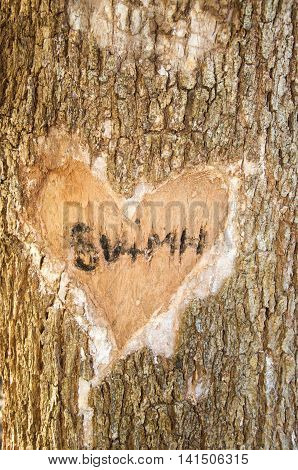 Tree carvings on tree trunk in the secret garden at the Careniup Wetlands with initials etched inside love heart in Western Australia.
