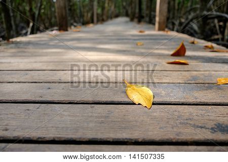 Dry leaves on wooden walkway bridge in mangrove forest located at Prasae Rayong Thailand.