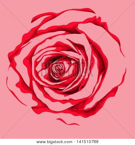 beautiful red rose flower isolated on white background. Hand-drawn with effect of drawing in watercolor. Design element for decorating greeting cards and invitations to the wedding birthday