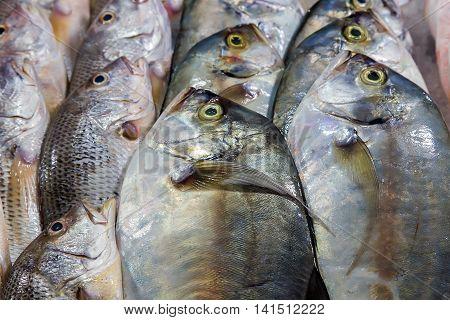 Dorada Fish Set Seafood