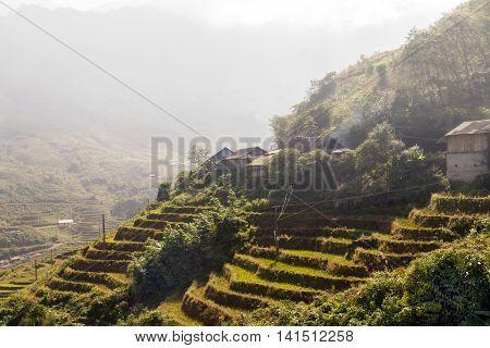 Farm Rice Field And Hut. Vietnam