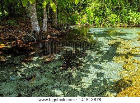 Mangrove Forest At Krabi In Thailand