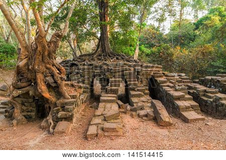 Jungle Angkor Wat, Khmer Temple Complex, Asia. Siem Reap, Cambodia.