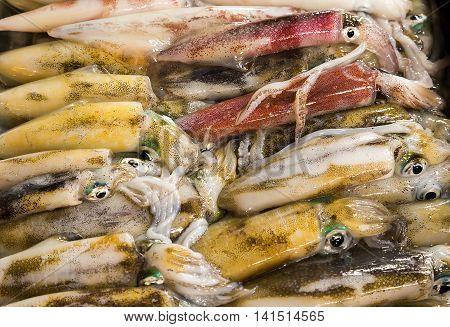 Raw Calamari