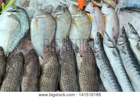 Fish On Ice Market