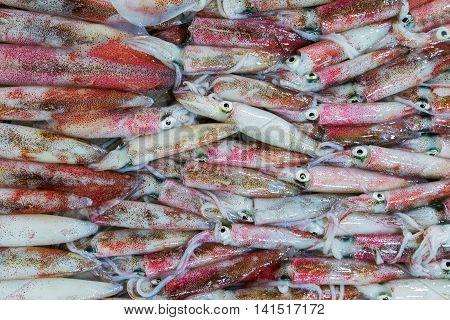 Squid On Ice Market