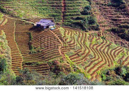 Rice Fields On Terraced Vietnam