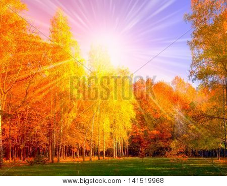 Falls Tree and woodland Sunset background, Magical autumn forest with amazing sunlight on a sunny day