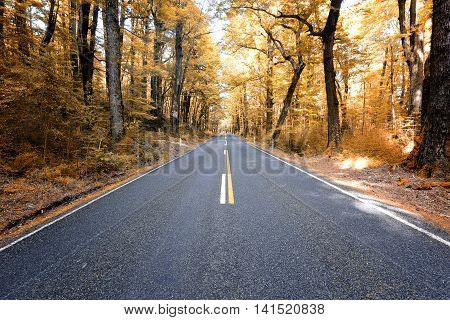 The trees in autumn look like silhouetted because of high contrast between yellow and dark color of the trees.