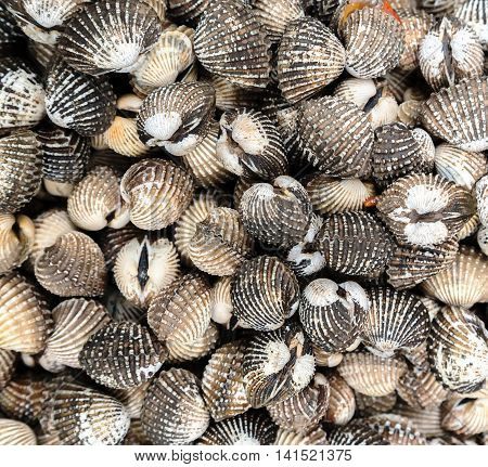 Sea Shell Background Or Texture