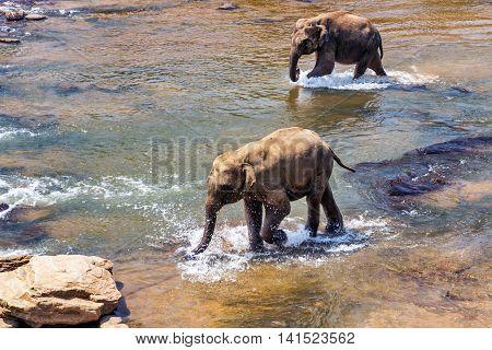 Elephants Family Asia Elephants