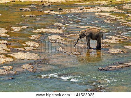 Elephant Leisure