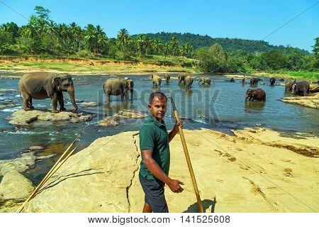 Family Asia Elephant Bath In River Ceylon Pinnawala