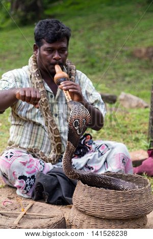 POLONNARUWA SRI LANKA - JANUARY 31 2016: Snake charmer adult man playing on musical instrument before snake at a basket
