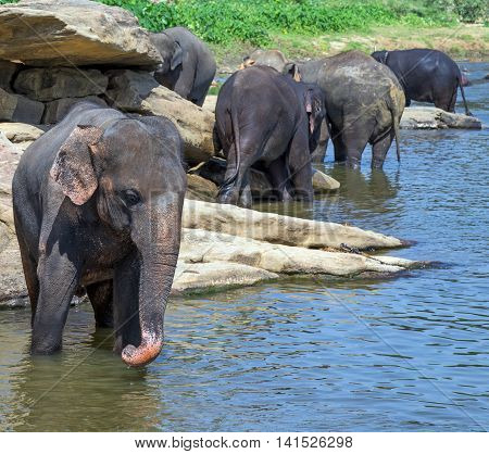 waterhole elephant in river outdoor leisure Preview Summer holidays, Vacation concept.