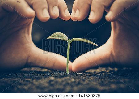 Nurturing baby plant / protect nature / Agriculture