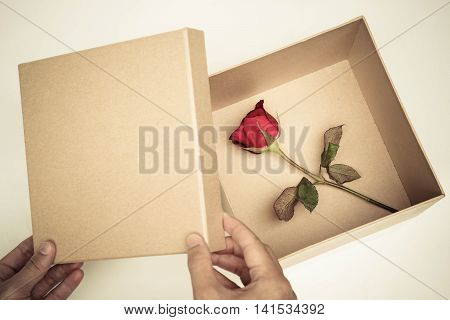Female hand opening a box of red rose / Surprised love concept