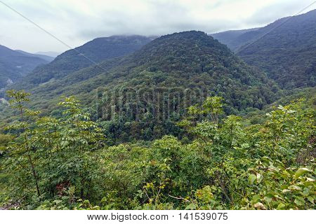 Mountains Covered In Forests