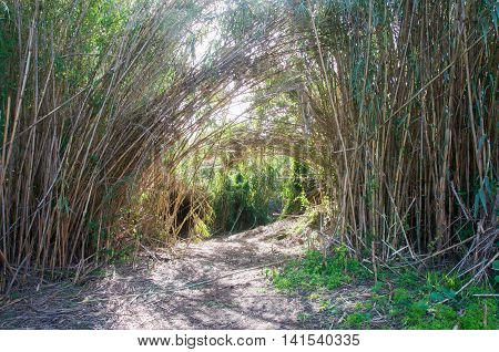 Lush bamboo entrance to the Secret Garden in the Careniup Wetlands in Gwelup, Western Australia.
