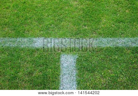 Part of soccer field. Green grass. Crosshair white lines.
