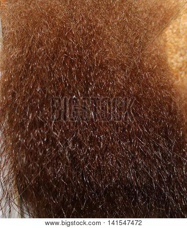 brown fur, or an ordinary bear (Ursus arctos) - predatory mammal, the largest terrestrial predators