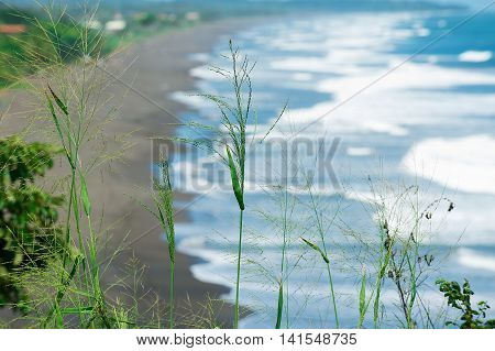 Green grass with the blurry background of the Pacific ocean black volcanic lava beach in Jaco, Costa Rica.