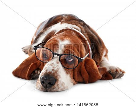 Basset hound dog in glasses on white background
