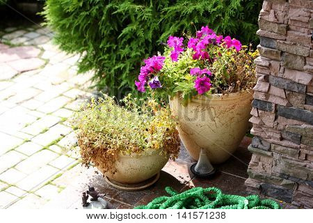 Garden - Flowers in clay pots on a porch