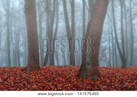 Autumn nature foggy view. Foggy autumn landscape - autumn bare trees and fallen autumn leaves in the park in foggy autumn weather. Deserted park in the autumn fog