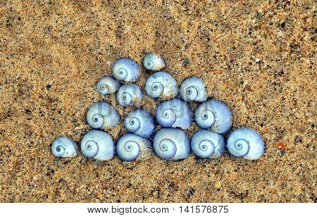 Violet Sea Snail shells (Janthina janthina) arranged in a Japanese cloud design on sand at the beach