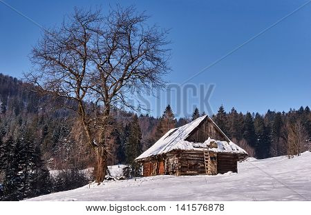 Pastoral hut in snow clearing in the winter in Beskidy Mountains in Poland