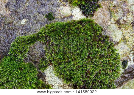 Close up of stone with moss in the forest selective focus macro
