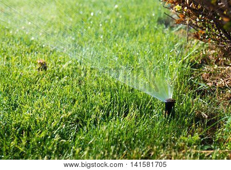 Lawn water sprinkler spraying water over grass in garden