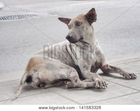 Sad eyes of stray dog in a big city, Bangkok, Thailand