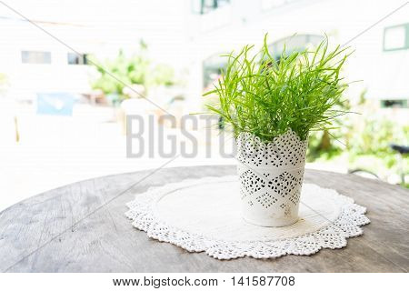 Selective focus on plant in a stencil vintage white pot on placemat on wooden table