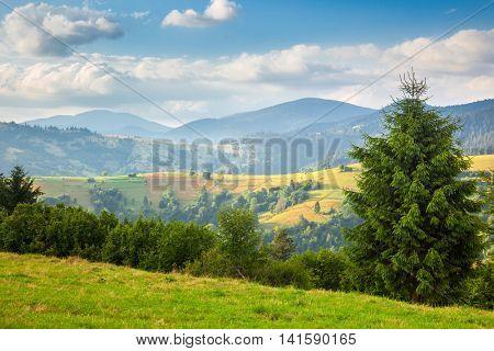 Summer sunny day is in mountain landscape. Carpathian, Ukraine, Europe. Beauty nature