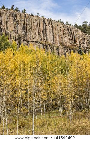 Golden Aspen Forest with Rocky Mountain in the San Juan Forest in Colorado