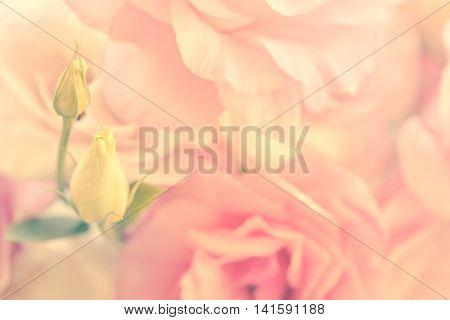 Gentle Flowers Background - vintage style, soft focus