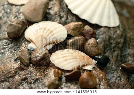 wet seashells and small stones lying on a huge granite wet stone on the beach, on the bank of the river