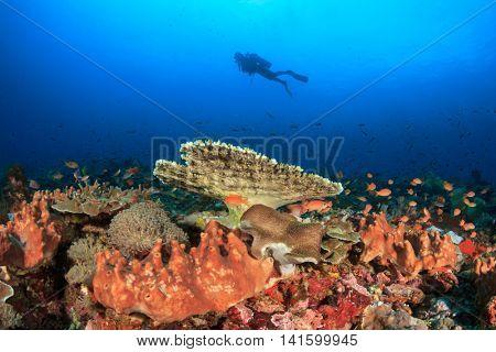 Scuba dive. Coral reef. Sea Ocean Underwater.