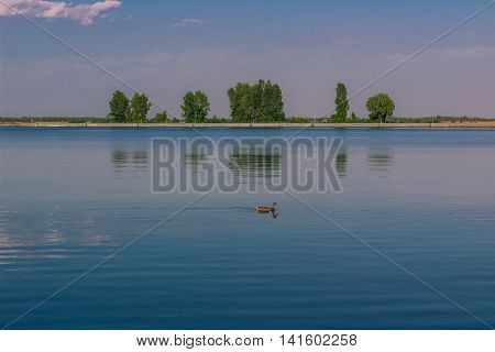 Relaxing water landscape with lonely duck and trees reflection