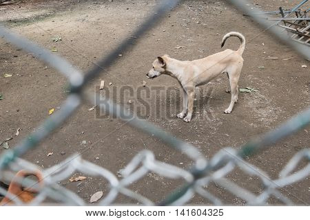 Stray dog behind cage in Foundation. Copy space