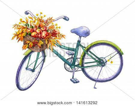Hand drawn illustration of bicycle with basket isolated on white background. Watercolor sketch of green bike yellow and red leaves ripe red apples. Autumn floral elements.