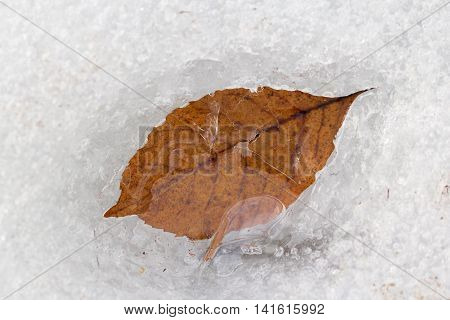 Frozen leaf in the ice. Winter is coming