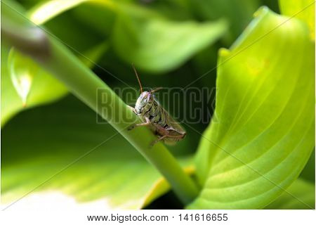 Marco of an insect sitting on a green leaf